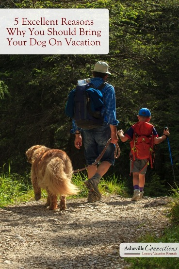 5 Excellent Reasons Why You Should Bring Your Dog On Vacation | Asheville Connections