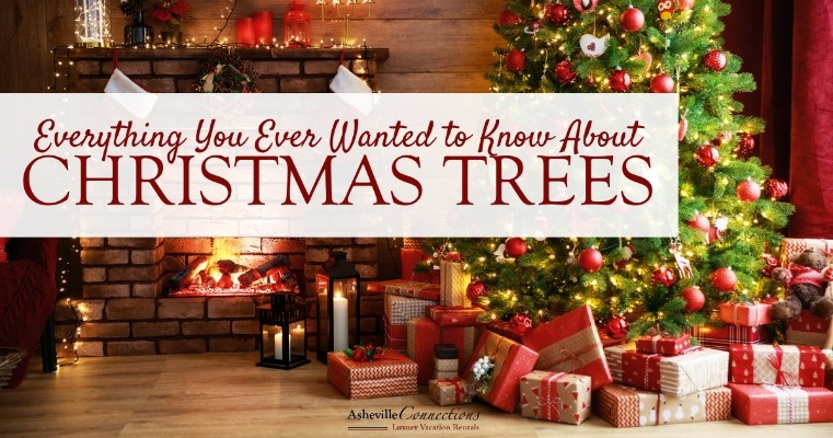 Everything You Ever Wanted to Know About Christmas Trees | Asheville Connections