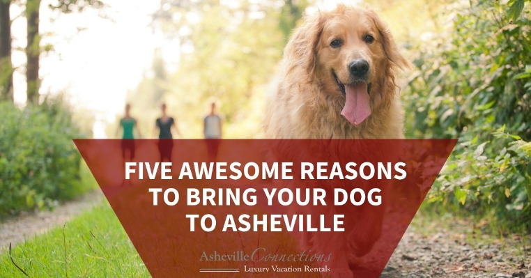 Five Awesome Reasons to Bring Your Dog to Asheville