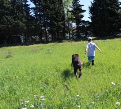 Boy walking his dog | Asheville Connections