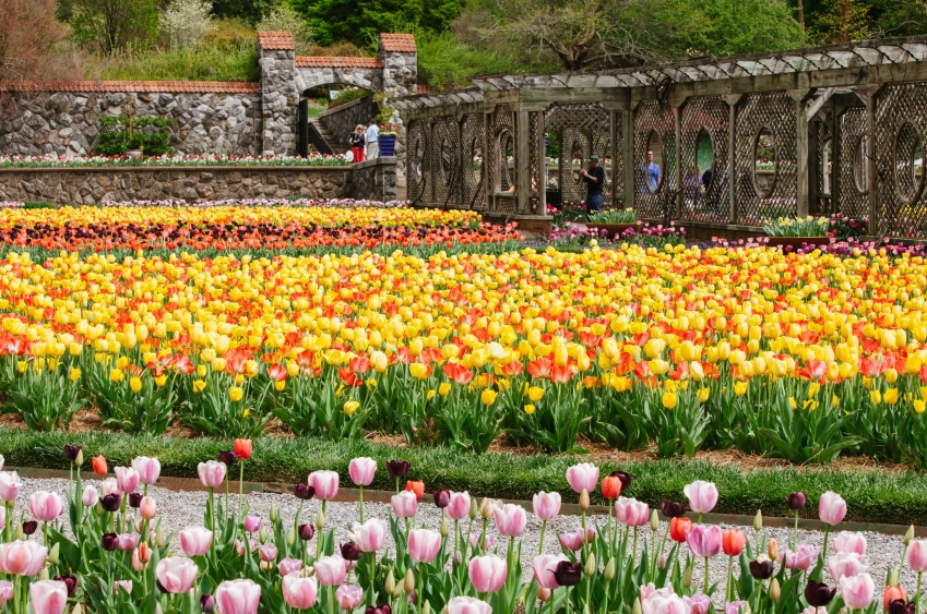 Biltmore Blooms in Asheville