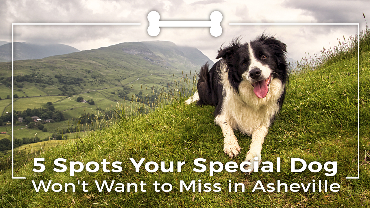 5-spots-your-special-dog-wont-want-to-miss-in-asheville