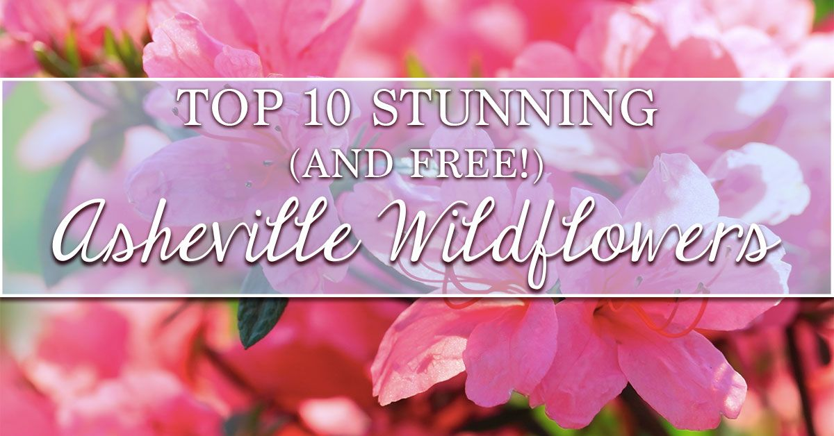 Top 10 Stunning (and Free!) Asheville Wildflowers