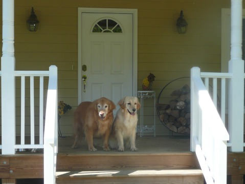 Asheville pet-friendly vacation rentals
