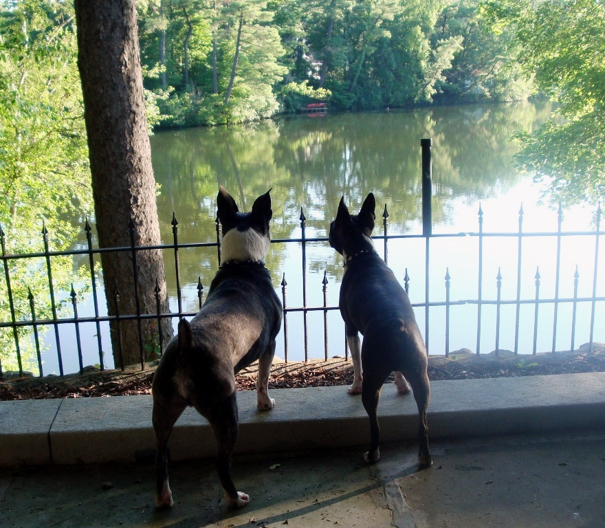 Asheville's pet-friendly parks