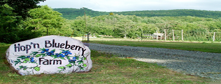 Hop n Blueberry Farm