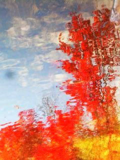 Fall Color Reflections Photo by Kim Guice