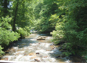 Asheville Mountain Stream